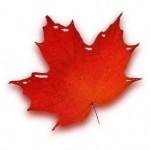 stylized_maple_leaf